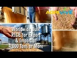 Acquire Bulk Rice for Importing, Rice Importers, Rice Importer, Rice Imports, Import, Import