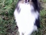 Dobby - tricks + clickertraining (2yrs)