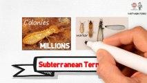 Termite Protection Services in Florida (Subterranean Formosan and Drywood Termites)
