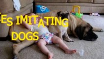 Funny babies imitating dogs Cute dog & baby compilation
