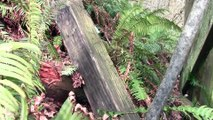 ABANDONED - Milwaukee Road Wood Railroad Trestle, Bellingham, WA