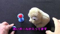 マピコ・マジック: 赤ボール・トリック 〜赤ちゃん熊と一緒に! (1:13)