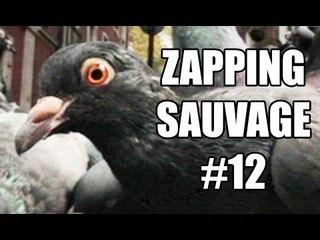 Un pigeon malin prend le métro pour faire ses courses - ZS n°12