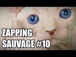 Que pensez-vous de ce chat mutant ? - ZS n°10