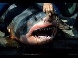 Le requin blanc du Leman