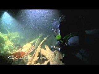 Une épave oubliée - Cotentin, la force de la mer - Thalassa (extrait)