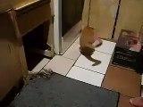 Quand une souris fait peur au chat !