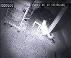New videos in www.mycats.ir(10)