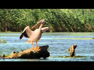 DRDA : Au fil du Danube - Le delta