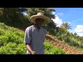 DRDA : Les Antilles - Le jardin créole