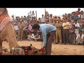 Concours du plus beau chameau (extrait plateau) - Vendredi 27 février  2015