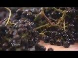 Le vigneron de Meknès - Faut Pas Rêver au Maroc (extrait)