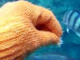 feeding to the tropical fishes by underwater camera 2(video marine deep sea pet beach)
