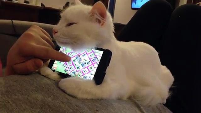 Ce petit chat sert de support pour téléphone mobile