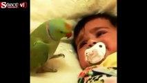 Bebeği susturmaya çalışan papağan