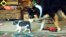 FUNNY VIDEOS  Funny Cats - Funny Dogs - Dogs Love Kittens - Funny Animals - Funny Cat Videos
