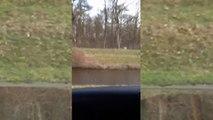 Wolf aan de wandel in Wezuperbrug - RTV Noord