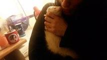 Fufu Cham et moi (détournement de furet)