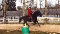 Jumbo poney Islandais