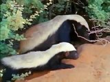SNAKE KILLERS - HONEY BADGERS OF THE KALAHARI DESERT - Discovery_Animals_Nature (documentary)