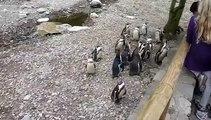 Même chez les pingouins, il y a des rejetés