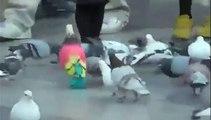 Un pigeon aux couleurs très originales