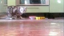 Un chat désire plus d'intimité pour manger son repas