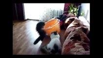 Nos amis cascadeurs de tous les jours : les chats !