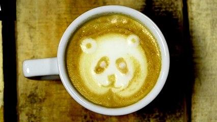 Latte Art : Petit Chat, Panda, Papillon, Lion, Cygne, ...