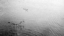 Tri Nguyen Ft. Ilios Quartet - Waterdrops - From CONSONNANCES ALBUM - Tri Nguyen/Ilios Quartet