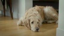 Cito pour Les Chiens guides (FFAC) - accessibilité des personnes aveugles, «Partout avec mon chien guide» - mars 2015
