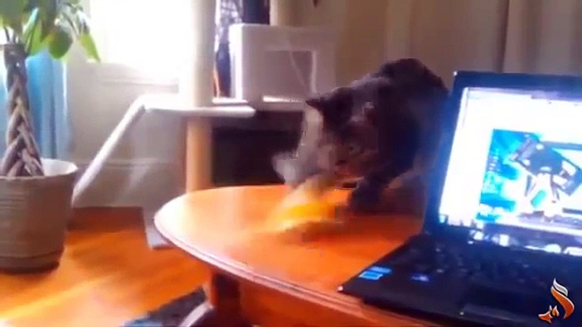 Funny Animals Fail Compilation  funny pets