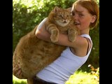 World s fattest Pets