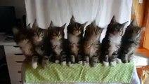 FAN DE CHATS ! Je surKIFFE cette vidéo ! 7 chatons adorables