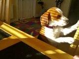 Cet adorable chien affamé échange volontier son jouet contre un bon repas