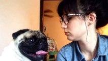 Une maitresse veut faire un bisou à son chien. Il refuse car elle pue de la gueule MDR !