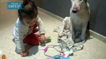Ce bull terrier passe une visite médicale par une fillette médecin de 4 ans