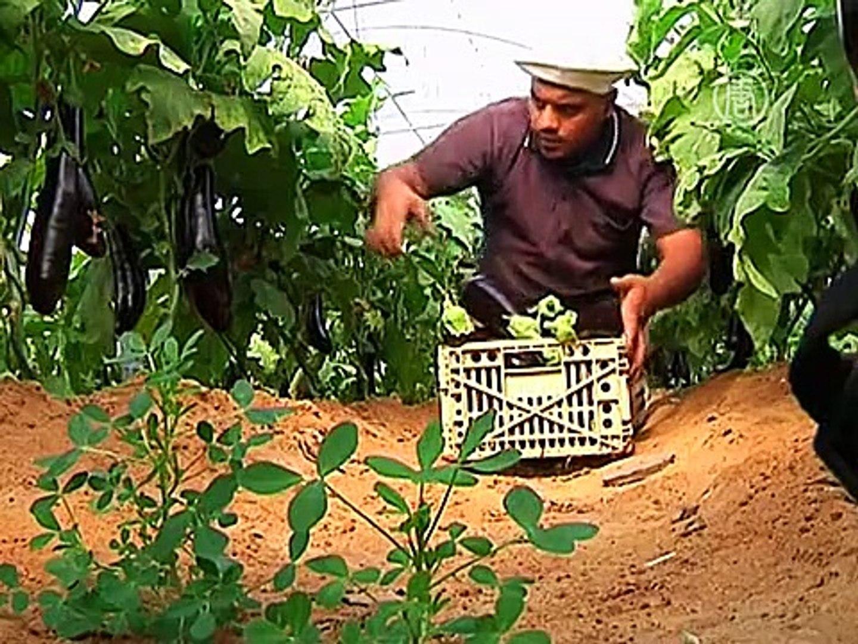Израиль снова импортирует овощи и фрукты из сектора Газа
