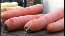 Toc Toques : Ganache carotte cgocolat blanc et sorbet carotte curcuma