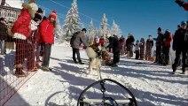 Course de chiens de traineaux au Lac Blanc 2015