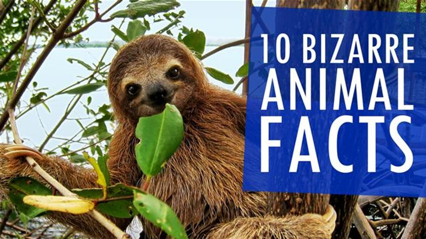 10 Bizarre Animal Facts