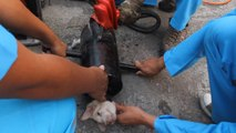 Sauvetage d'un chiot coincé dans un tuyau en métal