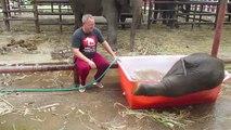 Un éléphanteau s'amuse pendant son bain