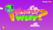 Why Are There Seven Days In A Week - I Wonder Why - Amazing and Interesting Fun Facts Video For Kids
