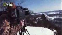 American Bald Eagle - Flying, Hunting [Wildlife Documentary]