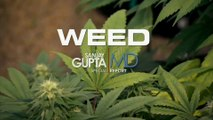 WEED, reportage sur le cannabis médicinal par le Dr Sanjay Gupta (CNN) (2013) (STFR)