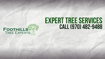 Tree Services in Fort Collins | Foothills Tree Services | Fort Collins Tree Services