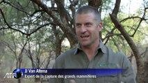 Afrique du sud : quand les éléphants prennent la pilulle