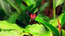 Voyage au Costa Rica, le meilleur des voyage au Costa Rica