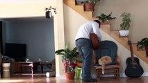 Un chat éclate un pot de fleurs sur son maitre